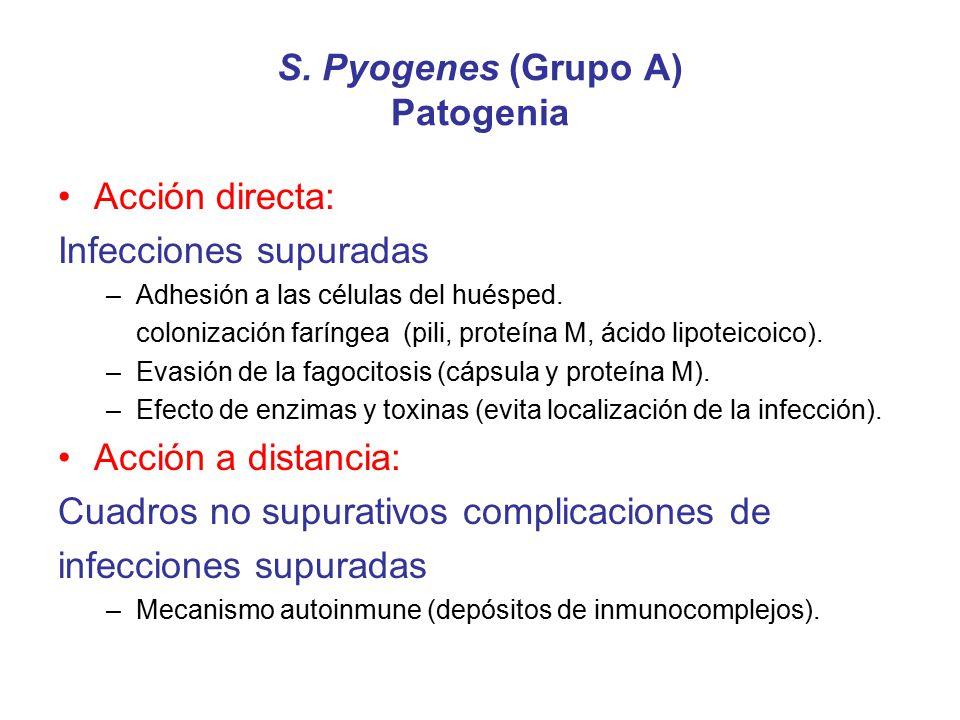 S. Pyogenes (Grupo A) Patogenia Acción directa: Infecciones supuradas –Adhesión a las células del huésped. colonización faríngea (pili, proteína M, ác