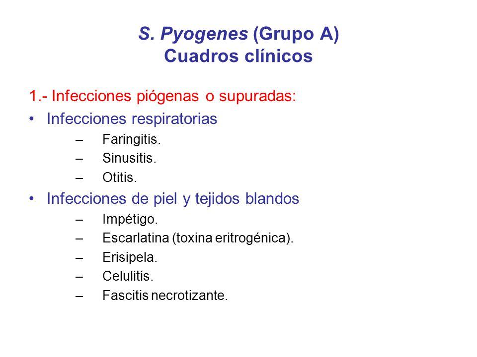 S. Pyogenes (Grupo A) Cuadros clínicos 1.- Infecciones piógenas o supuradas: Infecciones respiratorias –Faringitis. –Sinusitis. –Otitis. Infecciones d