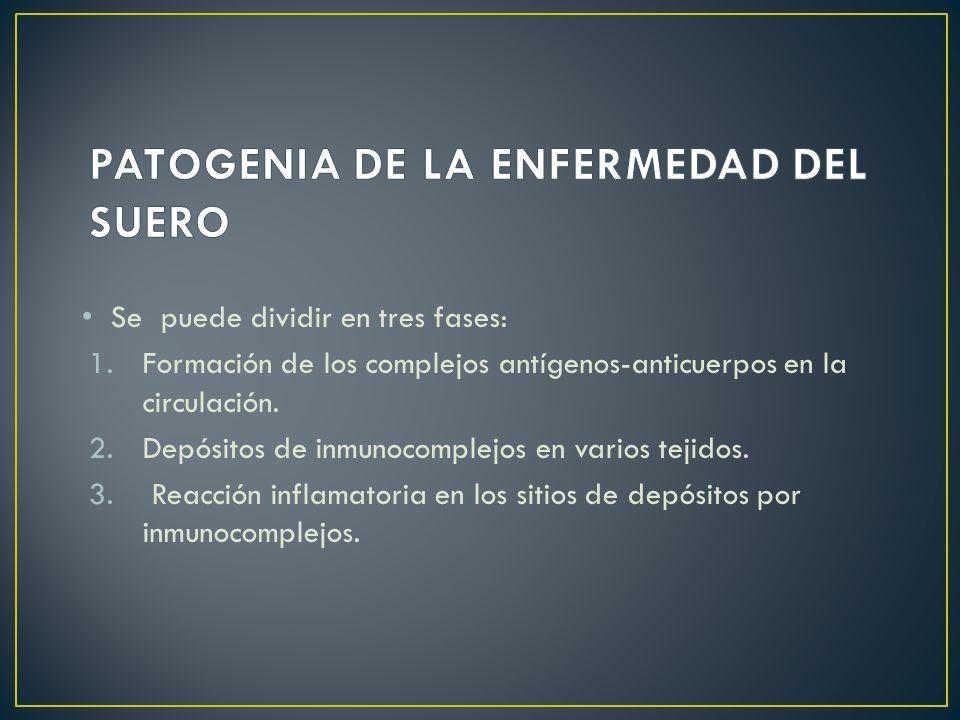 Se puede dividir en tres fases: 1.Formación de los complejos antígenos-anticuerpos en la circulación.