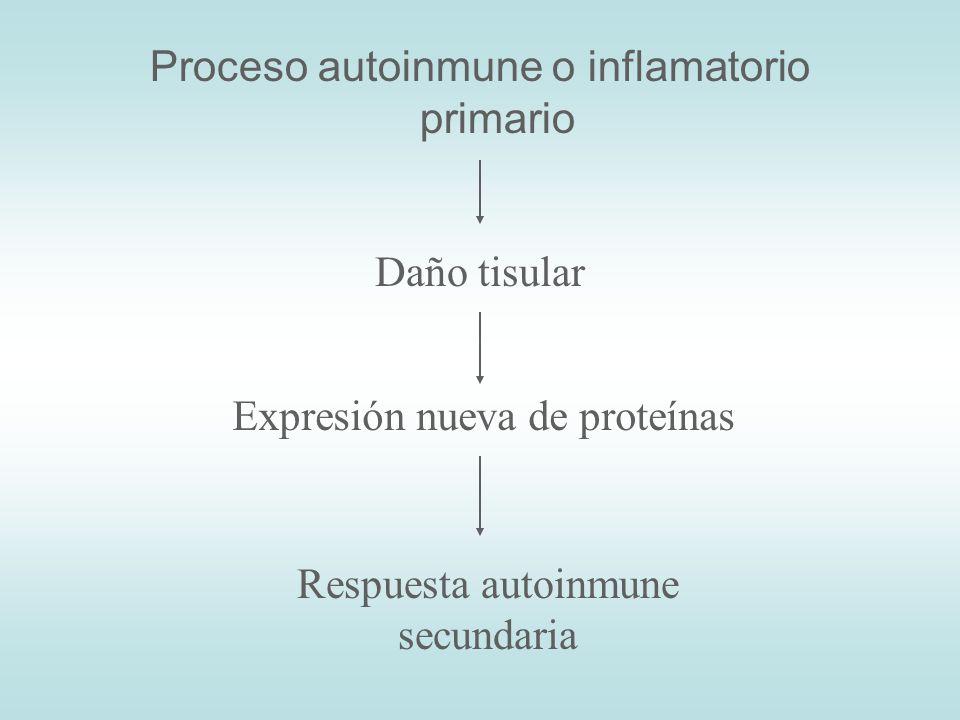 Proceso autoinmune o inflamatorio primario Daño tisular Expresión nueva de proteínas Respuesta autoinmune secundaria