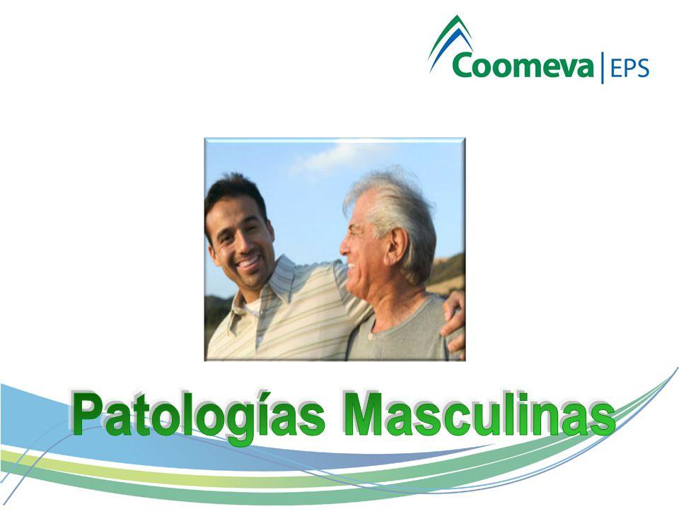 Varicocele Hidrocele Quistes del Epidídimo Balanitis Hipertrofia Prostática Benigna Cáncer de Próstata Cáncer de Testículo