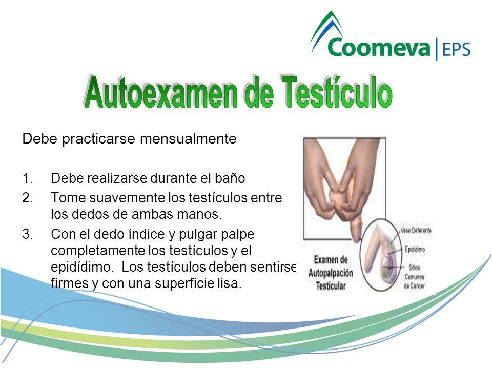 Debe practicarse mensualmente 1.Debe realizarse durante el baño 2.Tome suavemente los testículos entre los dedos de ambas manos.
