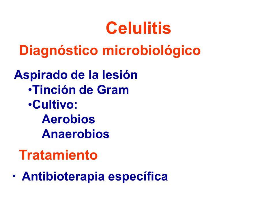 Celulitis Aspirado de la lesión Tinción de Gram Cultivo: Aerobios Anaerobios Antibioterapia específica Diagnóstico microbiológico Tratamiento