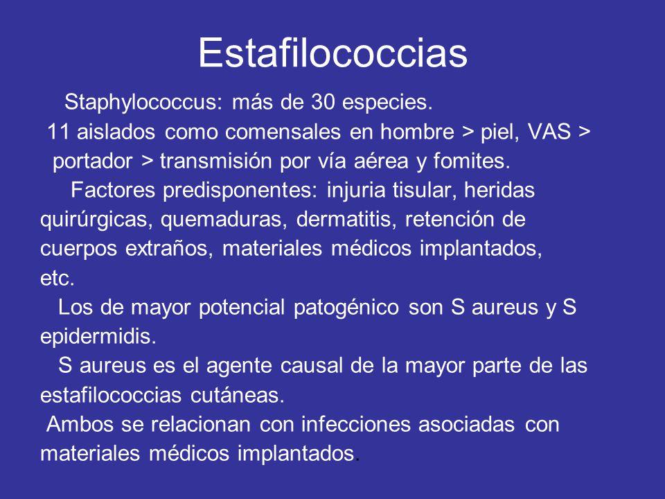 Estafilococcias Staphylococcus: más de 30 especies. 11 aislados como comensales en hombre > piel, VAS > portador > transmisión por vía aérea y fomites
