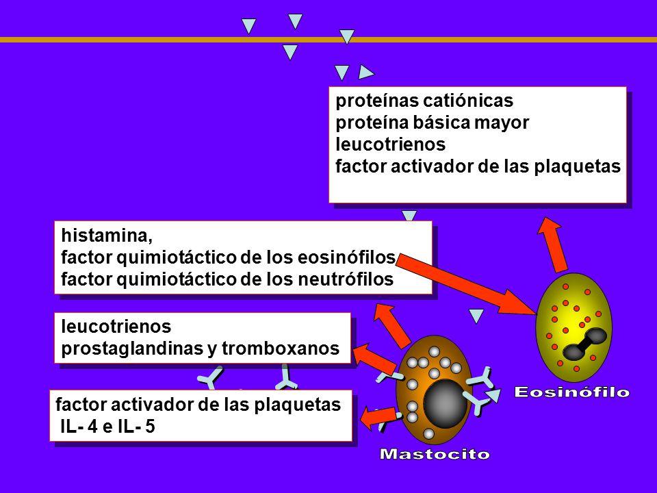 histamina, factor quimiotáctico de los eosinófilos factor quimiotáctico de los neutrófilos histamina, factor quimiotáctico de los eosinófilos factor q