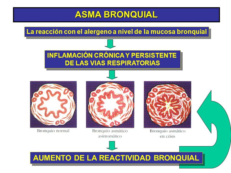 ASMA BRONQUIAL INFLAMACIÓN CRÓNICA Y PERSISTENTE DE LAS VIAS RESPIRATORIAS INFLAMACIÓN CRÓNICA Y PERSISTENTE DE LAS VIAS RESPIRATORIAS AUMENTO DE LA R
