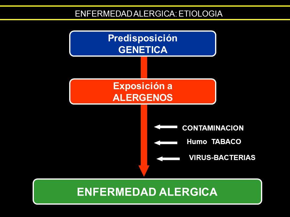 ENFERMEDAD ALERGICA: ETIOLOGIA Predisposición GENETICA Exposición a ALERGENOS ENFERMEDAD ALERGICA CONTAMINACION Humo TABACO VIRUS-BACTERIAS