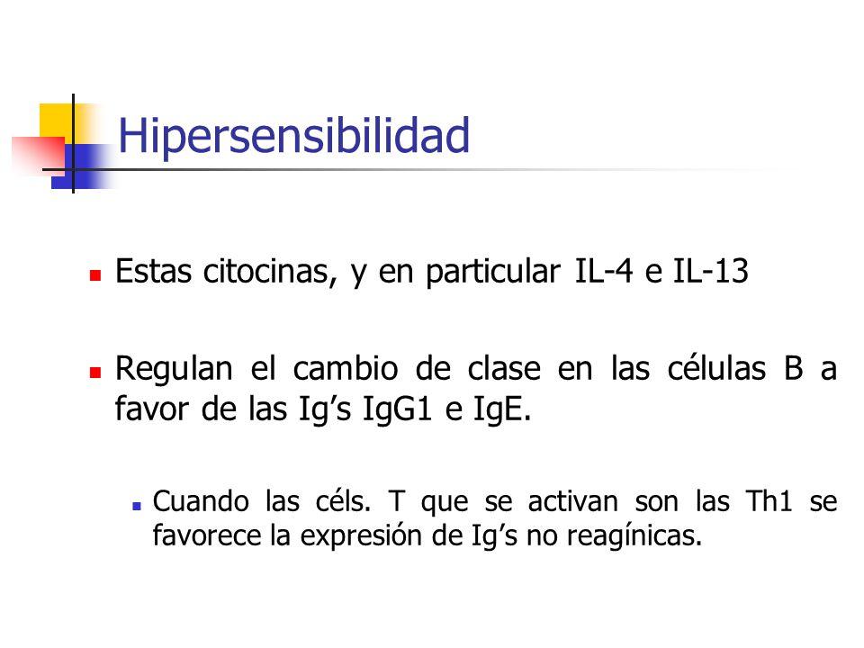 Hipersensibilidad Estas citocinas, y en particular IL-4 e IL-13 Regulan el cambio de clase en las células B a favor de las Ig's IgG1 e IgE. Cuando las
