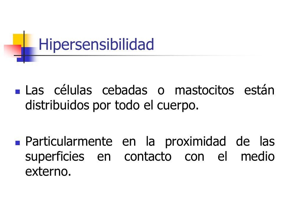 Hipersensibilidad Las células cebadas o mastocitos están distribuidos por todo el cuerpo. Particularmente en la proximidad de las superficies en conta