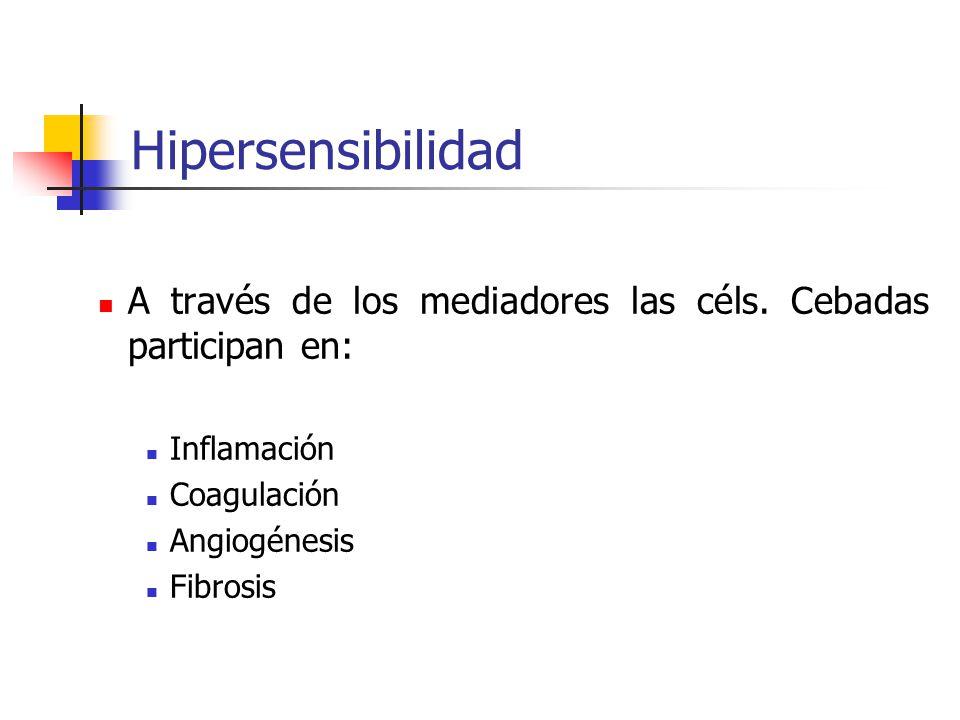 Hipersensibilidad A través de los mediadores las céls. Cebadas participan en: Inflamación Coagulación Angiogénesis Fibrosis