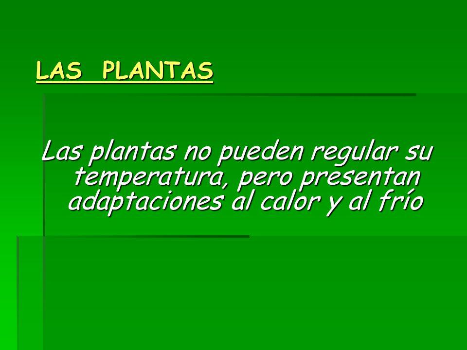 LAS PLANTAS Las plantas no pueden regular su temperatura, pero presentan adaptaciones al calor y al frío