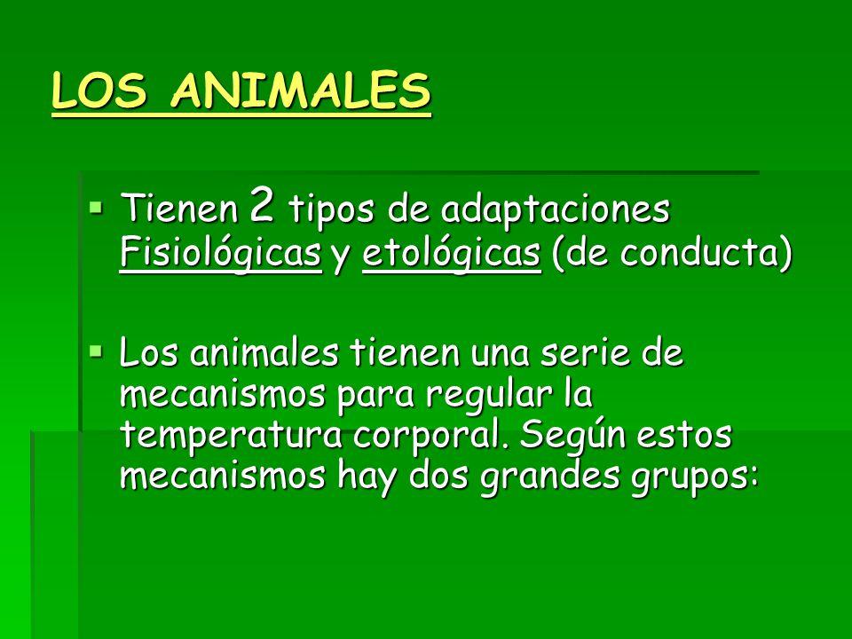 LOS ANIMALES  Tienen 2 tipos de adaptaciones Fisiológicas y etológicas (de conducta)  Los animales tienen una serie de mecanismos para regular la temperatura corporal.
