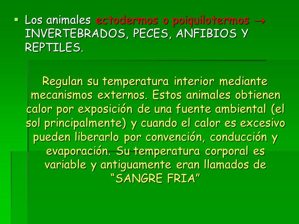  Los animales ectodermos o poiquilotermos  INVERTEBRADOS, PECES, ANFIBIOS Y REPTILES.