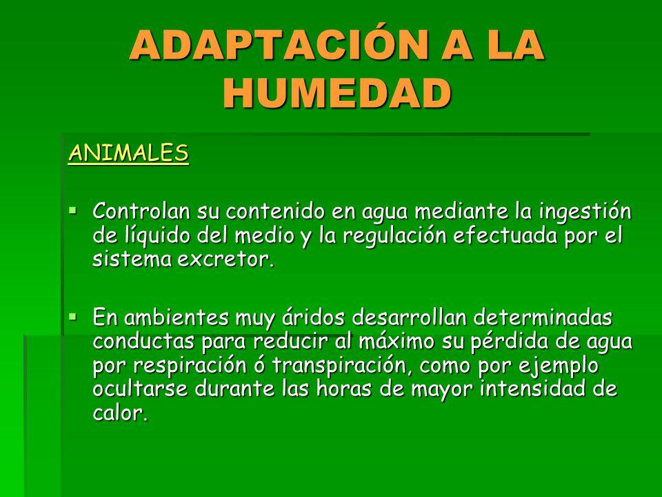 ADAPTACIÓN A LA HUMEDAD ANIMALES  Controlan su contenido en agua mediante la ingestión de líquido del medio y la regulación efectuada por el sistema excretor.