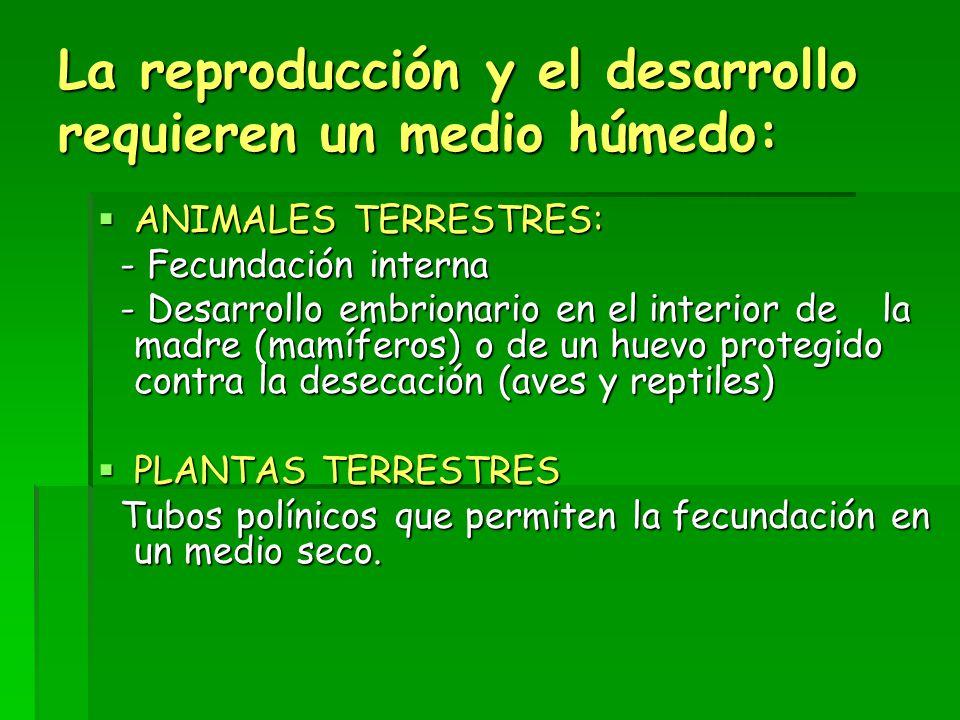 La reproducción y el desarrollo requieren un medio húmedo:  ANIMALES TERRESTRES: - Fecundación interna - Fecundación interna - Desarrollo embrionario en el interior de la madre (mamíferos) o de un huevo protegido contra la desecación (aves y reptiles) - Desarrollo embrionario en el interior de la madre (mamíferos) o de un huevo protegido contra la desecación (aves y reptiles)  PLANTAS TERRESTRES Tubos polínicos que permiten la fecundación en un medio seco.