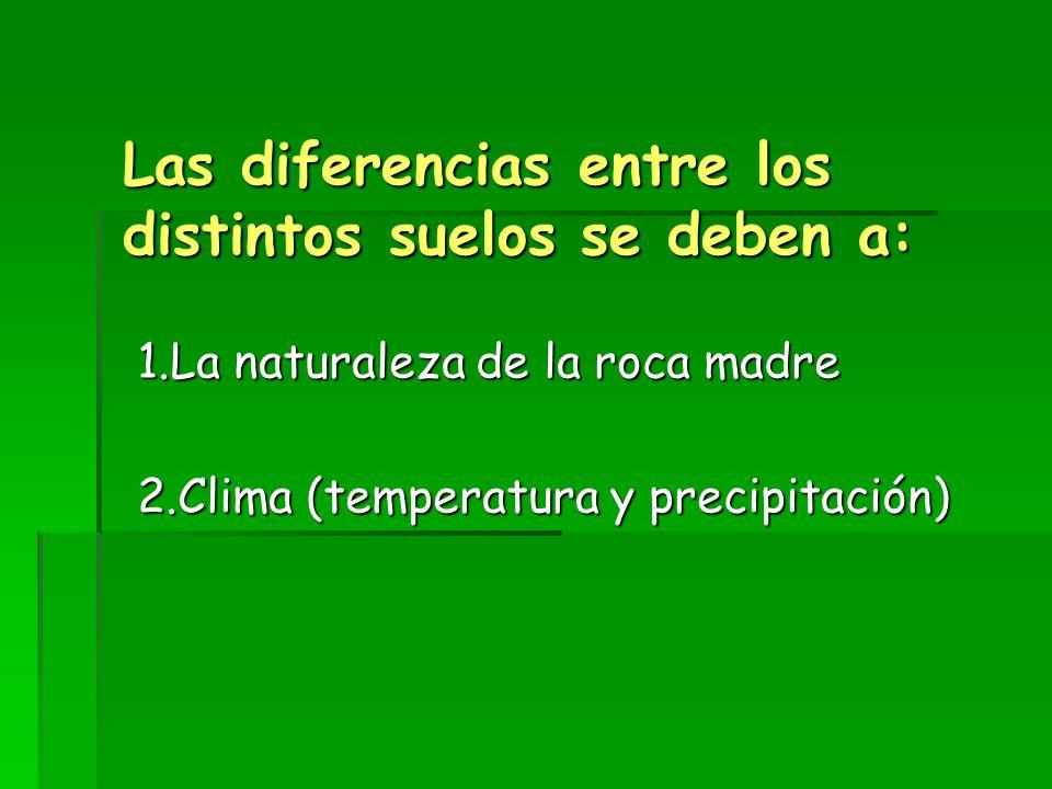 Las diferencias entre los distintos suelos se deben a: 1.La naturaleza de la roca madre 2.Clima (temperatura y precipitación)
