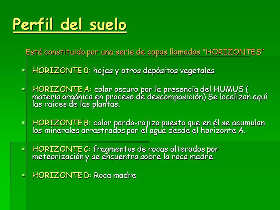 Perfil del suelo Está constituido por una serie de capas llamadas HORIZONTES  HORIZONTE 0: hojas y otros depósitos vegetales  HORIZONTE A: color oscuro por la presencia del HUMUS ( materia orgánica en proceso de descomposición) Se localizan aquí las raíces de las plantas.