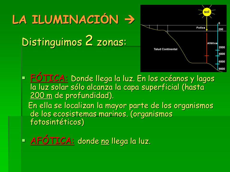 LA ILUMINACI Ó N  Distinguimos 2 zonas:  FÓTICA: Donde llega la luz.