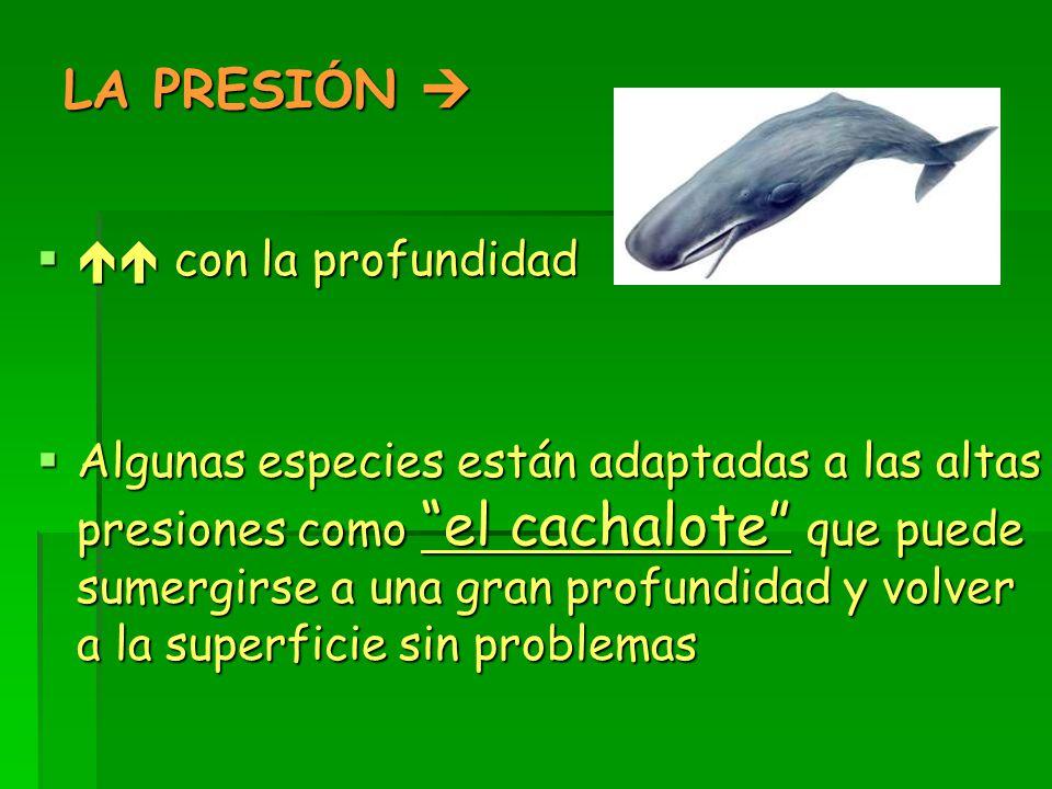 LA PRESI Ó N   con la profundidad  Algunas especies están adaptadas a las altas presiones como el cachalote que puede sumergirse a una gran profundidad y volver a la superficie sin problemas