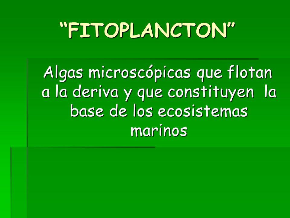 FITOPLANCTON Algas microscópicas que flotan a la deriva y que constituyen la base de los ecosistemas marinos Algas microscópicas que flotan a la deriva y que constituyen la base de los ecosistemas marinos
