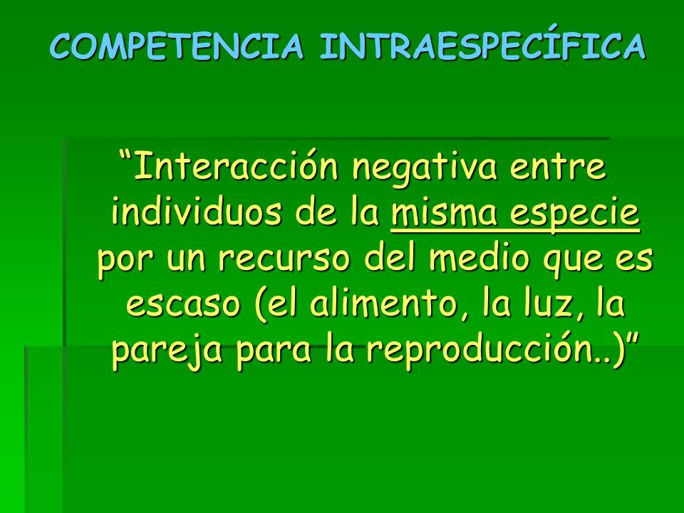 COMPETENCIA INTRAESPECÍFICA Interacción negativa entre individuos de la misma especie por un recurso del medio que es escaso (el alimento, la luz, la pareja para la reproducción..)