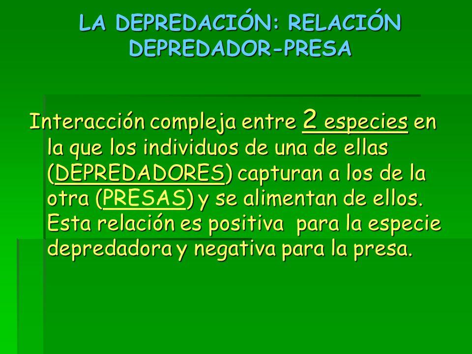 LA DEPREDACIÓN: RELACIÓN DEPREDADOR-PRESA Interacción compleja entre 2 especies en la que los individuos de una de ellas (DEPREDADORES) capturan a los de la otra () y se alimentan de ellos.