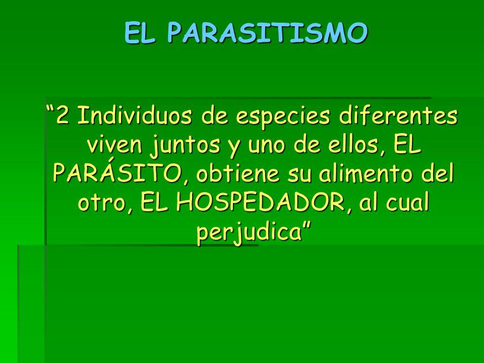 EL PARASITISMO 2 Individuos de especies diferentes viven juntos y uno de ellos, EL PARÁSITO, obtiene su alimento del otro, EL HOSPEDADOR, al cual perjudica 2 Individuos de especies diferentes viven juntos y uno de ellos, EL PARÁSITO, obtiene su alimento del otro, EL HOSPEDADOR, al cual perjudica