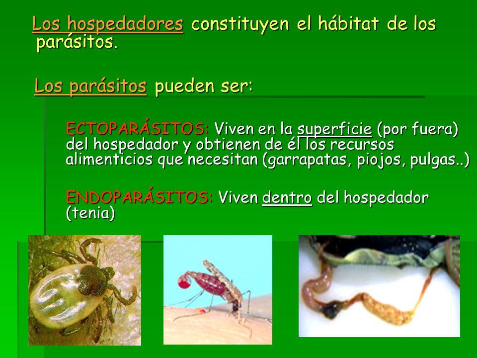 Los hospedadores constituyen el hábitat de los parásitos.