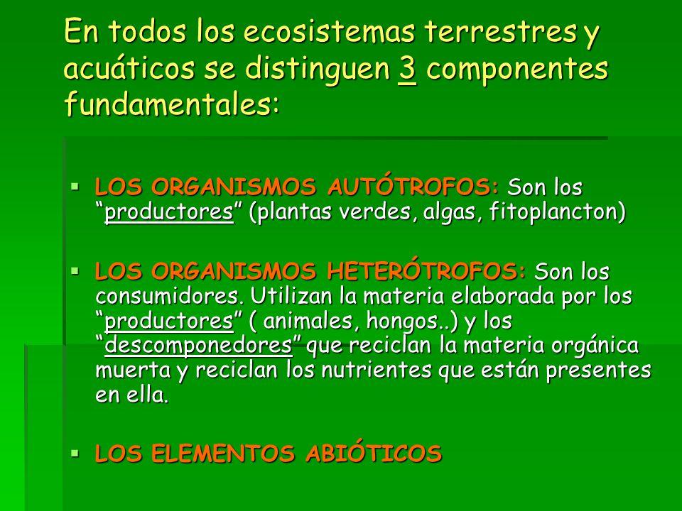 En todos los ecosistemas terrestres y acuáticos se distinguen 3 componentes fundamentales:  LOS ORGANISMOS AUTÓTROFOS: Son los productores (plantas verdes, algas, fitoplancton)  LOS ORGANISMOS HETERÓTROFOS: Son los consumidores.
