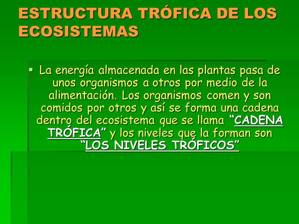 ESTRUCTURA TRÓFICA DE LOS ECOSISTEMAS  La energía almacenada en las plantas pasa de unos organismos a otros por medio de la alimentación.