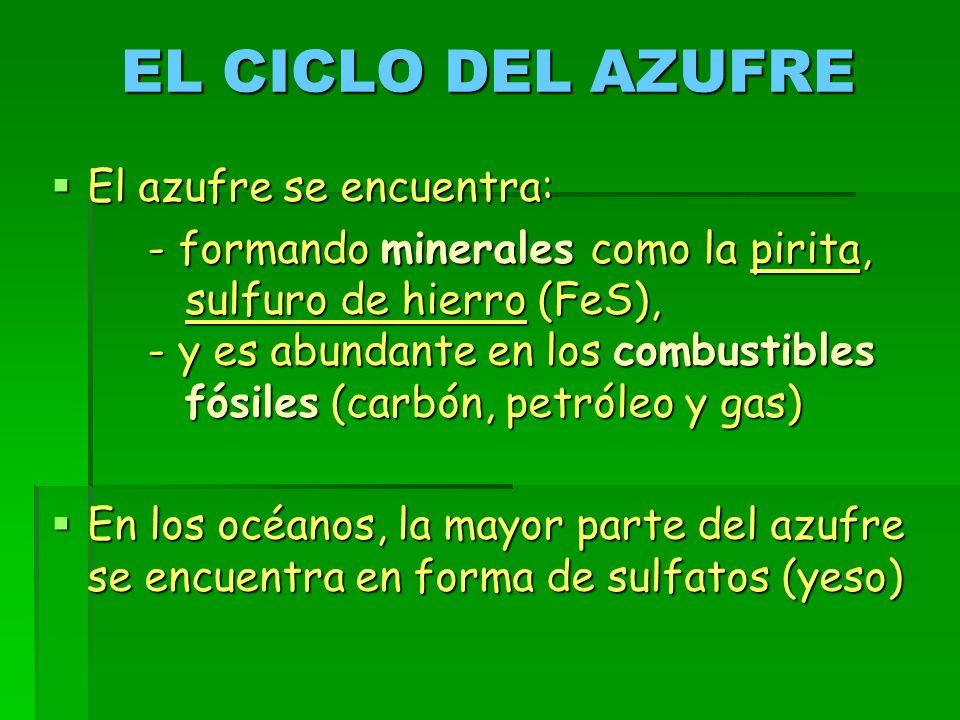 EL CICLO DEL AZUFRE  El azufre se encuentra: - formando minerales como la pirita, sulfuro de hierro (FeS), - y es abundante en los combustibles fósiles (carbón, petróleo y gas)  En los océanos, la mayor parte del azufre se encuentra en forma de sulfatos (yeso)