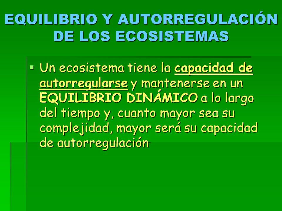 EQUILIBRIO Y AUTORREGULACIÓN DE LOS ECOSISTEMAS  Un ecosistema tiene la capacidad de autorregularse y mantenerse en un EQUILIBRIO DINÁMICO a lo largo del tiempo y, cuanto mayor sea su complejidad, mayor será su capacidad de autorregulación