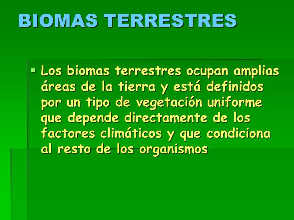 BIOMAS TERRESTRES  Los biomas terrestres ocupan amplias áreas de la tierra y está definidos por un tipo de vegetación uniforme que depende directamente de los factores climáticos y que condiciona al resto de los organismos