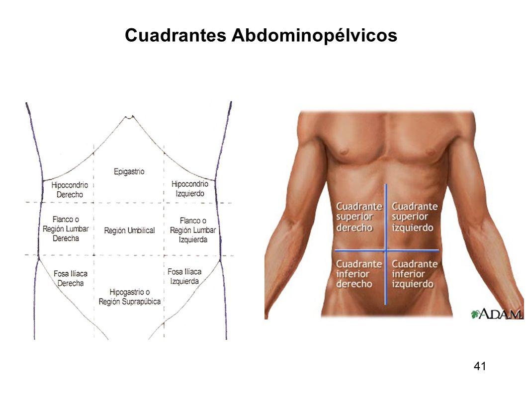 Vistoso Derecho Anatomía Cuadrante Superior Composición - Anatomía ...