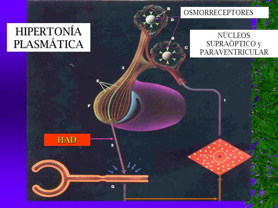  DESHIDRATACIÓN GRAVE: 50 ml/kg/hora RITMO DE ADMINISTRACIÓN