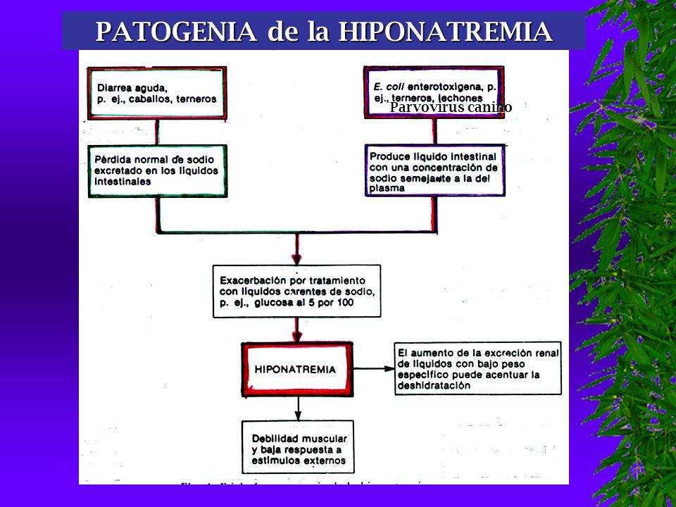 TIPOS DE DESHIDRATACIÓN Parvovirus