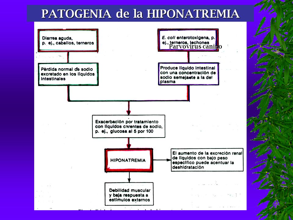 PATOGENIA de la HIPONATREMIA Parvovirus canino