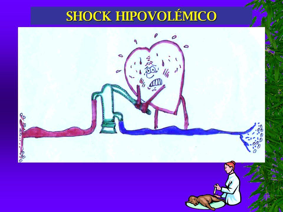 SHOCK RUPTURA DE LA HEMODINAMIA MUERTE CELULAR; FIN DE LA VIDA DEL ANIMAL.