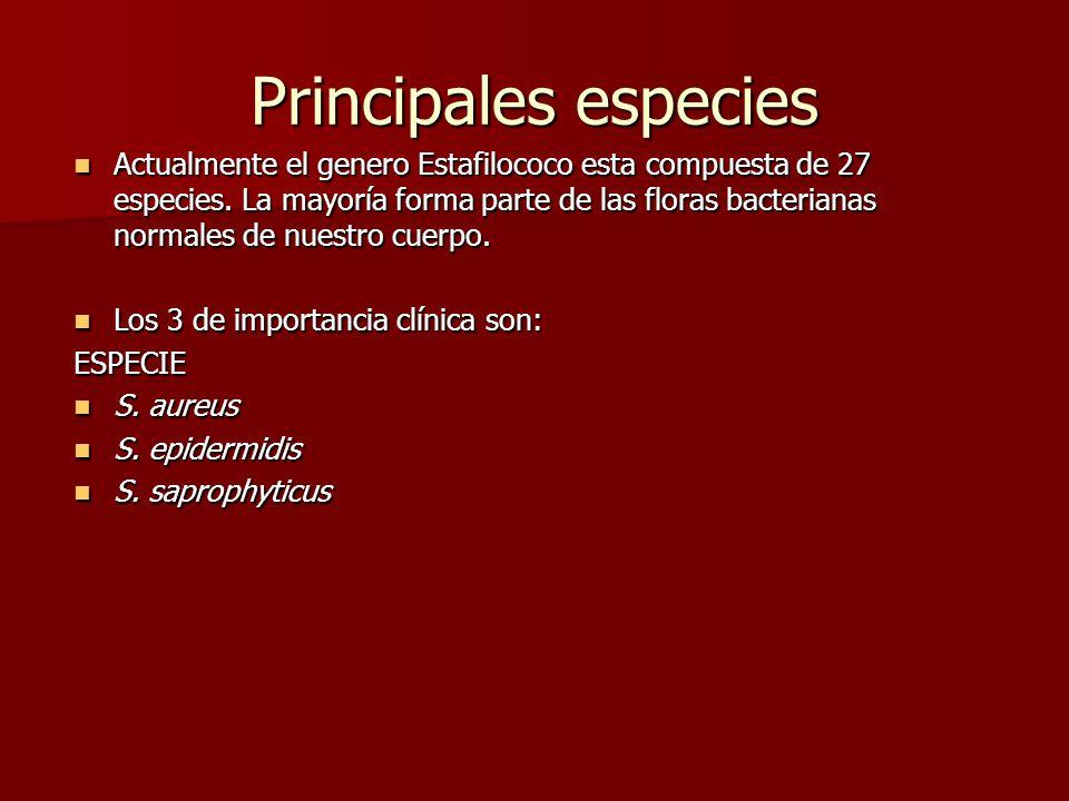 Actualmente el genero Estafilococo esta compuesta de 27 especies.