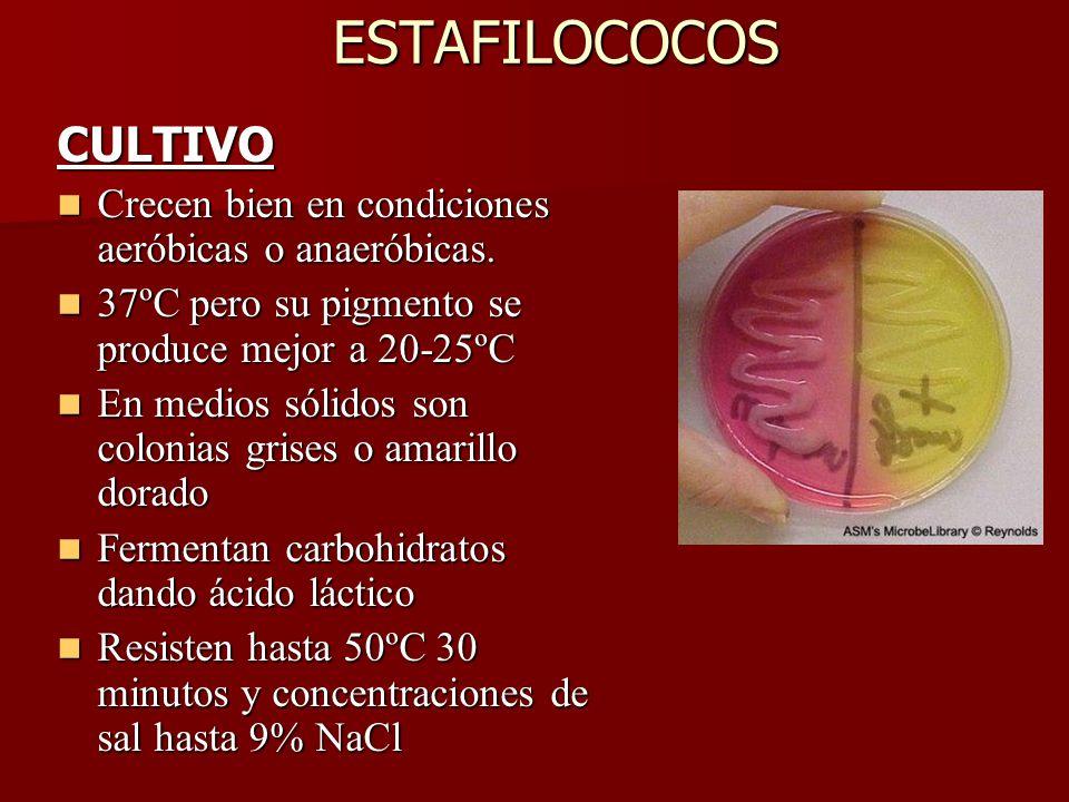 ESTAFILOCOCOS CULTIVO Crecen bien en condiciones aeróbicas o anaeróbicas.