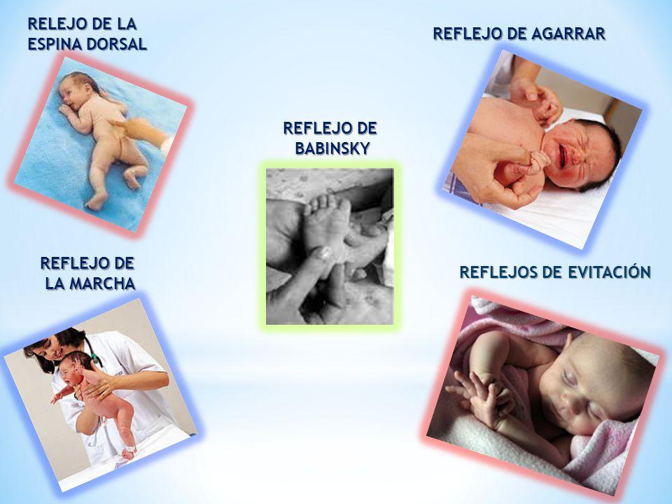 REFLEJO DE AGARRAR RELEJO DE LA ESPINA DORSAL REFLEJO DE LA MARCHA LA MARCHA REFLEJOS DE EVITACIÓN REFLEJO DE BABINSKY