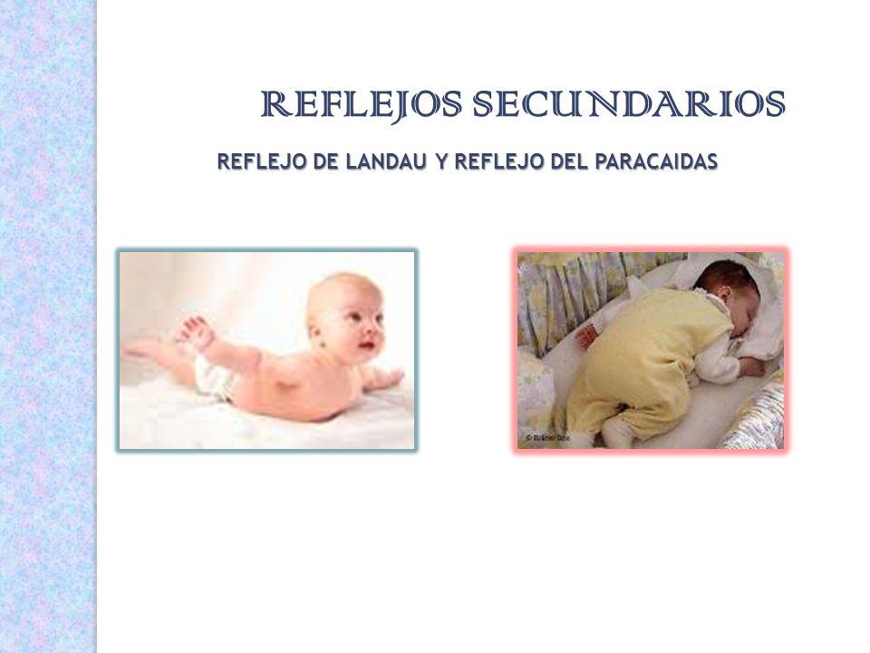 REFLEJOS SECUNDARIOS REFLEJO DE LANDAU Y REFLEJO DEL PARACAIDAS