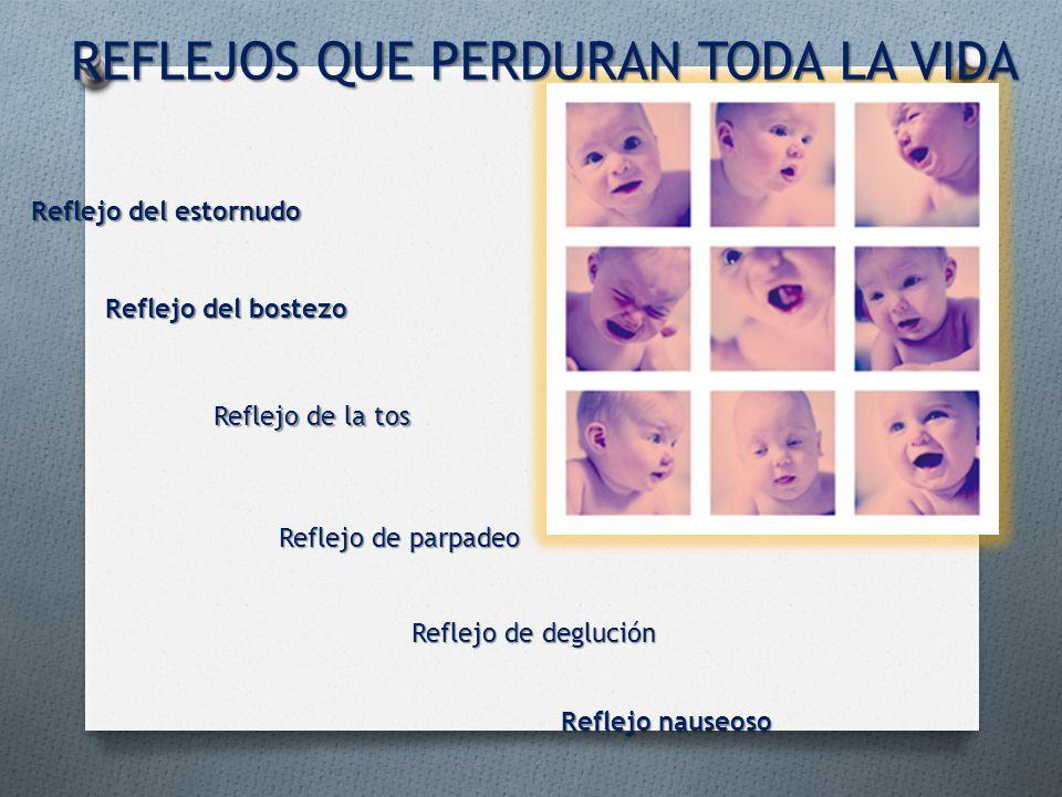 Reflejo de deglución Reflejo de parpadeo Reflejo de la tos Reflejo nauseoso Reflejo del estornudo Reflejo del bostezo REFLEJOS QUE PERDURAN TODA LA VI