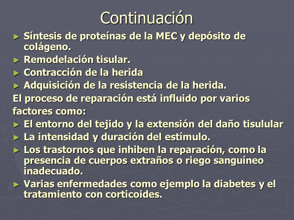 Continuación ► Síntesis de proteínas de la MEC y depósito de colágeno. ► Remodelación tisular. ► Contracción de la herida ► Adquisición de la resisten