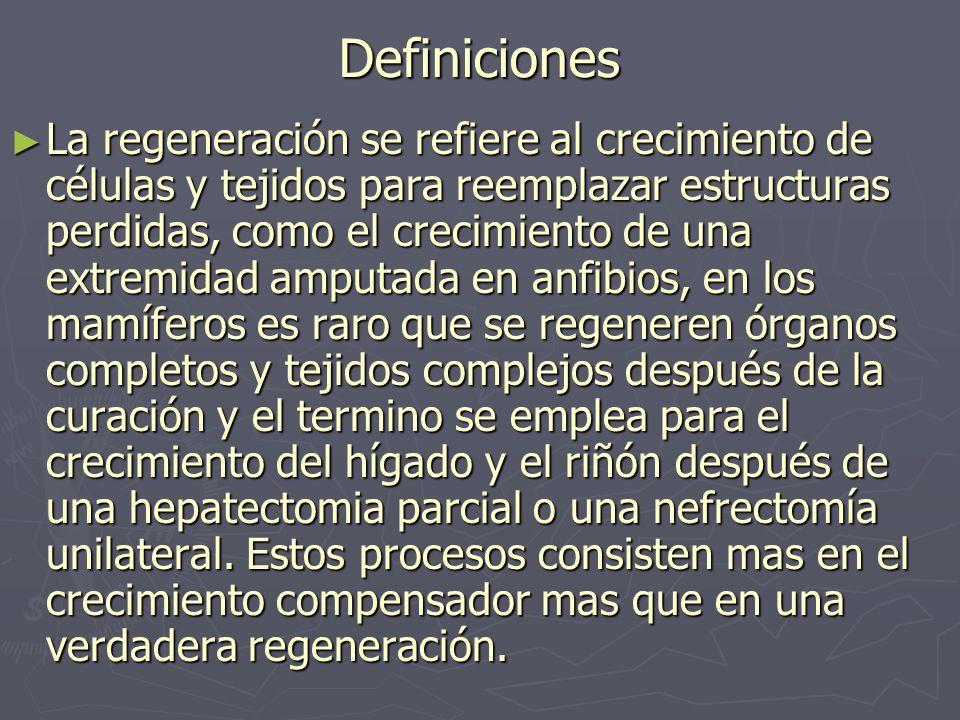 Definiciones ► La regeneración se refiere al crecimiento de células y tejidos para reemplazar estructuras perdidas, como el crecimiento de una extremi