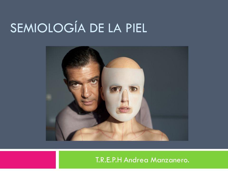 SEMIOLOGÍA DE LA PIEL T.R.E.P.H Andrea Manzanero.
