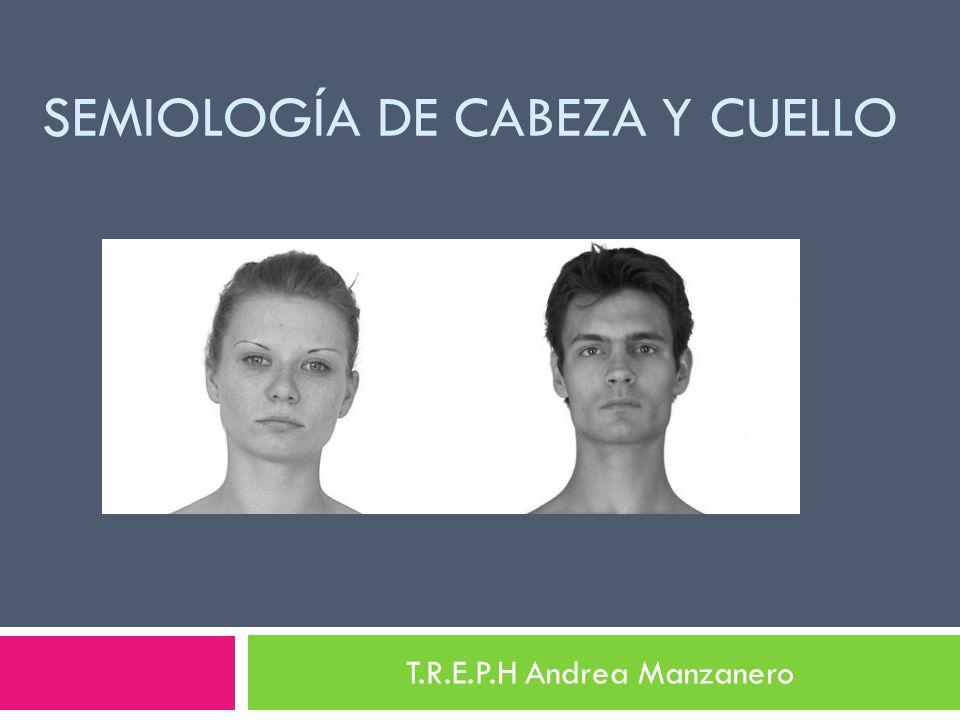 SEMIOLOGÍA DE CABEZA Y CUELLO T.R.E.P.H Andrea Manzanero