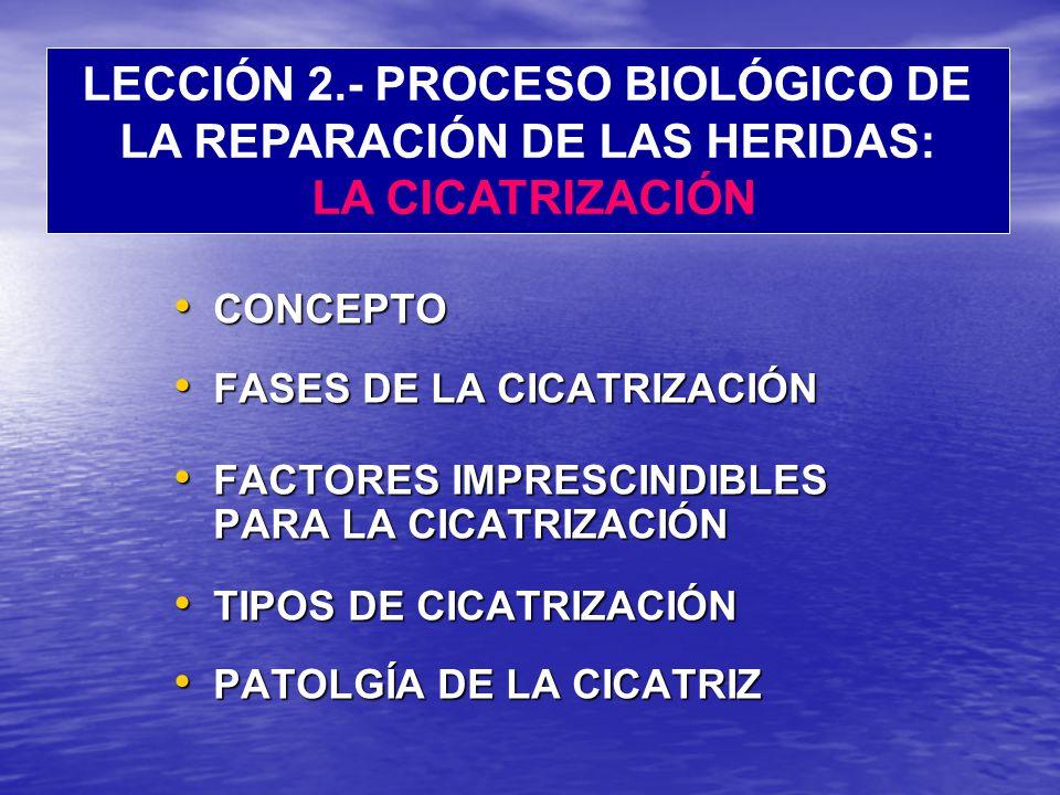 CONCEPTO CONCEPTO FASES DE LA CICATRIZACIÓN FASES DE LA CICATRIZACIÓN FACTORES IMPRESCINDIBLES PARA LA CICATRIZACIÓN FACTORES IMPRESCINDIBLES PARA LA CICATRIZACIÓN TIPOS DE CICATRIZACIÓN TIPOS DE CICATRIZACIÓN PATOLGÍA DE LA CICATRIZ PATOLGÍA DE LA CICATRIZ LECCIÓN 2.- PROCESO BIOLÓGICO DE LA REPARACIÓN DE LAS HERIDAS: LA CICATRIZACIÓN
