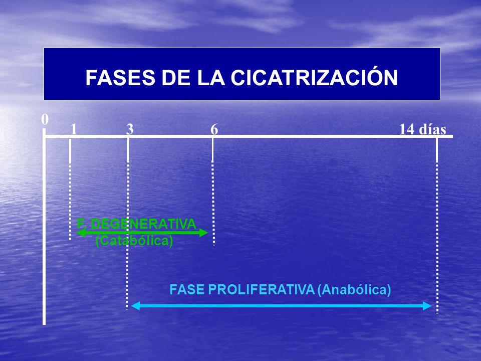 1 3 6 14 días 0 FASE PROLIFERATIVA (Anabólica) F.