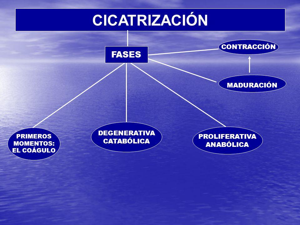 CICATRICES PATOLÓGICAS CICATRICES PATOLÓGICAS Exuberante Hipertrófica Queloide